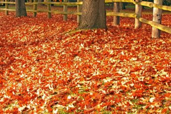 Fall Back by Ian Sane / CC BY 2.0