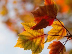 fall resized (1)
